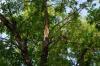 Упавшая ветка убила пенсионерку во время урагана в Тамбове