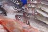 Правительство намерено в разы увеличить сбор на вылов рыбы в ДФО