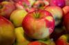В Пскове изъяли 60 тонн санкционных яблок