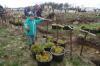 Нашествие короеда: под топор пойдет 82 гектара леса в Ореховском лесничестве