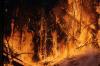 Житель Забайкалья спалил несколько сотен гектаров леса ради любопытства