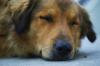 Фото с массовым геноцидом собак в России перед ЧМ оказалось подделкой