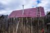 Власти Орловской области ввели карантин из-за вспышки птичьего гриппа