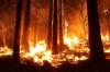 Власти Томской области ввели в регионе особый противопожарный режим
