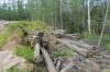 Подрядчики «Газпрома» допустили нарушения при строительстве «Силы Сибири» в Якутии