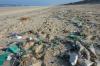 «Травили мошек, а погибла рыба»: астраханский пляж завалило дохлой рыбой