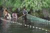 НК «Конданефть» успешно восполняет рыбные запасы Югры