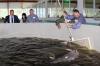 Производство стерляди и форели планируется увеличить вдвое в Нижегородской области