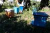 В Мордовии пчелы «держат в страхе» жителей села