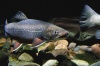 Норвегия рассматривает Калининградскую область для инвестиций в аквакультуру