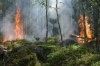 В Карелии горят леса: шесть крупных пожаров зарегистрировано в пяти районах республики