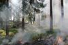 В Карелии загорелся остров: более 60 гектаров леса охвачены огнем