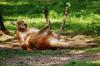 Установлена причина «пьяного» поведения кенгуру