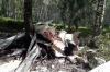 Спасатели нашли самолет, пропавший под Новосибирском. Пилот погиб