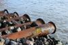 Удмуртский агрохолдинг уличили в сливе сточных вод