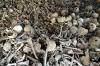 Тюменцы обнаружили в лесу сатанинский алтарь из костей