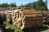 В деревообработку в Югре вложат более пяти миллиардов рублей
