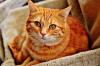 В Апатитах пристав хотел конфисковать кошек за долги хозяев