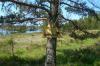 Пожарные не обнаружили радиации на острове Кугрисаари в Ладожском озере