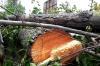 В Петрозаводске неизвестные вырубили зеленую зону на глазах у прохожих