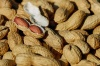 Более пяти тонн китайского арахиса с опасным токсином обнаружили в Приморье