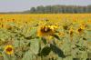 В Крыму будут внедрять цифровое сельское хозяйство