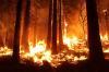 Два лесных пожара все еще не потушены на Ямале