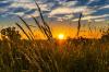 Глава Тувы призвал заготовителей кормов «использовать каждый сухой день»
