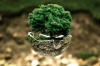 В Подмосковье пройдет акция «Наш лес. Посади свое дерево»