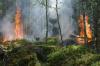 На выходных в России прогнозируют средний и высокий классы пожарной опасности в лесах