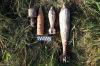 В Крыму и Тверской области обезврежены 24 тысячи боеприпасов времен Великой Отечественной