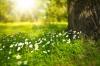 Калининградская область станет пилотным регионом по озеленению
