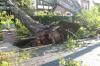 Мэрия Улан-Удэ не хочет платить владельцу автомобиля, пострадавшему от упавшего дерева