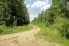 В Марий Эл арендаторы леса задолжали федеральному бюджету миллион