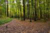 В Нижегородской области разрабатывается проект лесного плана