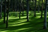 Антипинский НПЗ принял участие в озеленении сквера в Тюмени