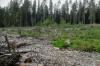 Общественники проверили информацию о тотальном уничтожении карельских лесов. И ужаснулись