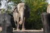 Жители Ленобласти о новом зоопарке: без социалки проживем, а без слона – тоска