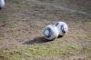 Хоть за 300 миллиардов: волгоградец за 30 миллионов продает футбольный мяч