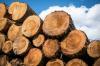 В красноярском правительстве обсудили с делегацией КНР  сотрудничество в сфере лесопереработки