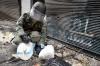 НАК сообщает, что в Керченском колледже нашли взрывное устройство