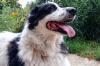 Единороссы поддерживают усиление ответственности за недопуск инвалидов с собаками-поводырями в общественные места