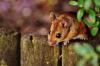 Первую мышь, родившуюся от двух самок, вывели ученые