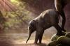 Меланья Трамп кормит слона в Кении и говорит о проблемах экологии