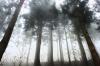Мужчина ушел в лес за орехами и не вернулся в ЕАО