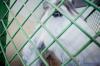 Живодеры заморили голодом лошадей на ипподроме в Саратове