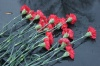 Мэр Иркутска выразил соболезнования жителям Керчи