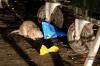 «Бегают целым табуном!» Центр Екатеринбурга заполонили крысы: жители в панике
