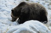Правоохранители застрелили медведя, промышлявшего в пригороде Иркутска