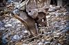 В Омске горожане возмущены горами мусора на Левобережье